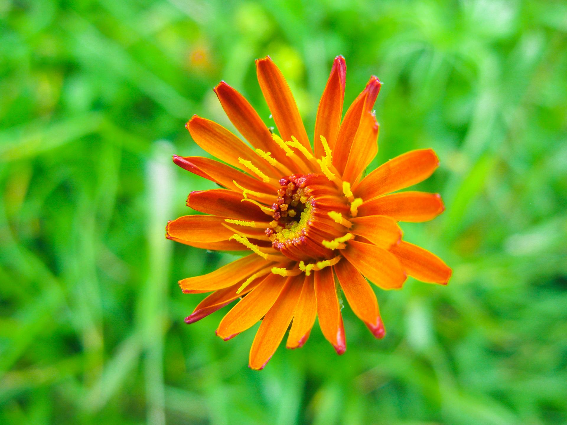 IMG_9451 bloem